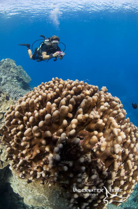 Photographer and Hard Coral