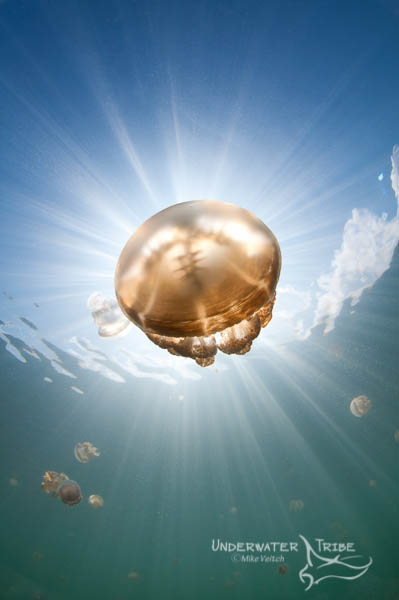 Jellyfish and Sunbeams