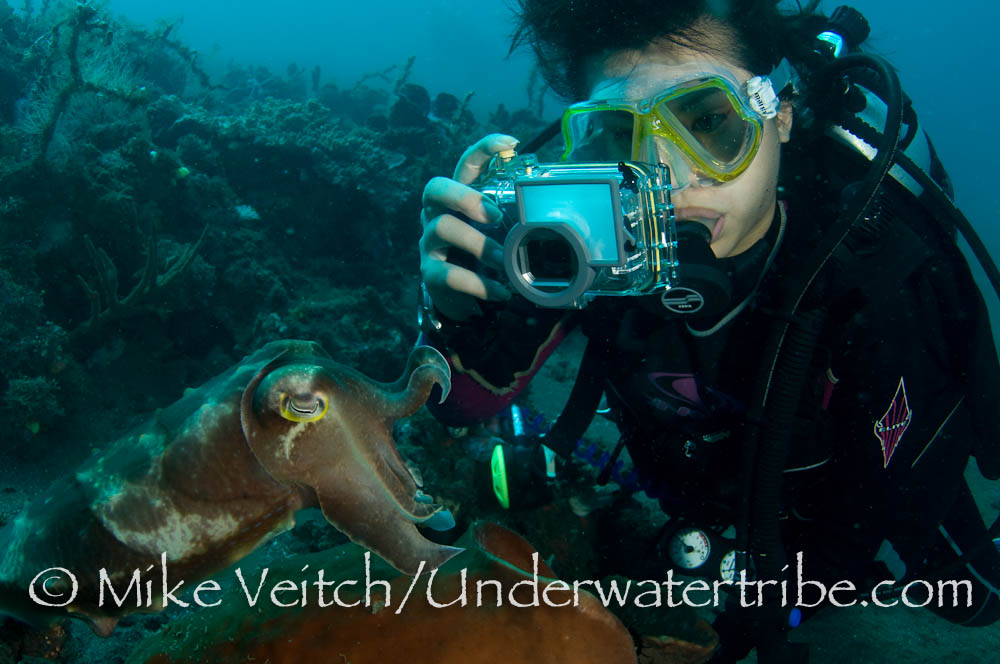 Photographer and Cuttlefish